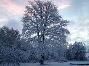 Sne i mosen 2015