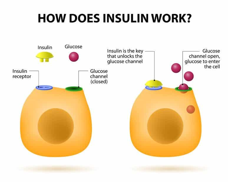 Insulin blodsukker