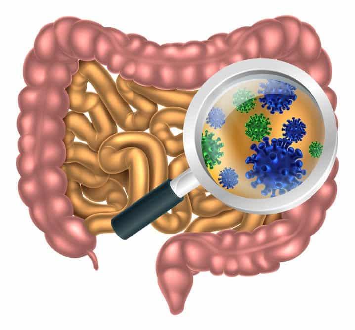 Tarmflora mikrobiom