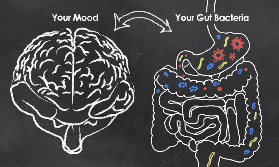 tarmflora og hjernen