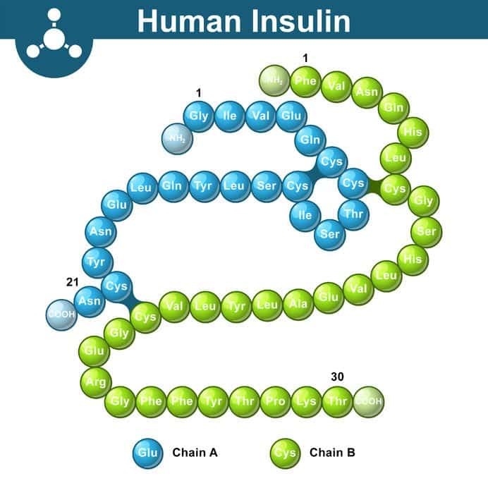 Humant insulin