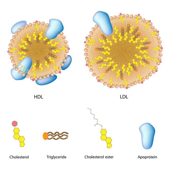 Lipoproteiner kolesterol