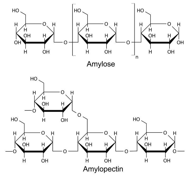 stivelse amylose amylopectin