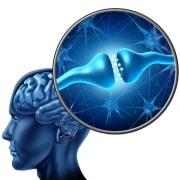 brain hjerne signalstoffer